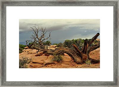 Narley Tree Framed Print by Marty Koch