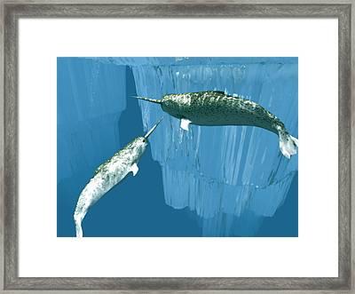 Narwhals Framed Print by Christian Darkin