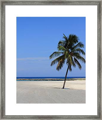 Nassau Palm Framed Print by Coby Cooper