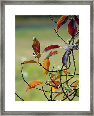 Natural Autumn Framed Print by Pamela Patch