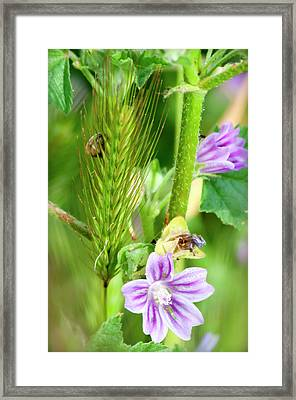 Framed Print featuring the photograph Natural Bouquet by Pedro Cardona