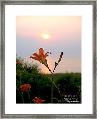 Natural Celebration Framed Print by Glenn McCurdy