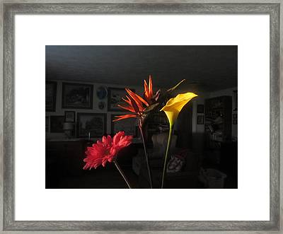 Framed Print featuring the photograph Natural Light by Tina M Wenger