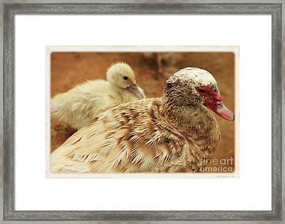 Framed Print featuring the photograph Natural Subjection by Lori Mellen-Pagliaro