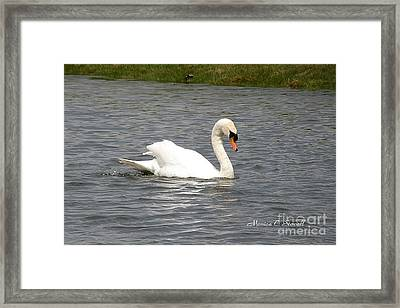 Animals A33 Framed Print