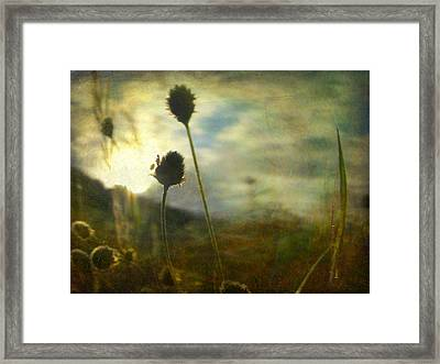 Framed Print featuring the photograph Nature #11 by Alfredo Gonzalez