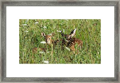 Nature Beauty  Framed Print by Glenn Lawrence
