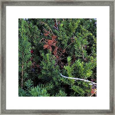 #nature #bush #brush #trees #plants Framed Print