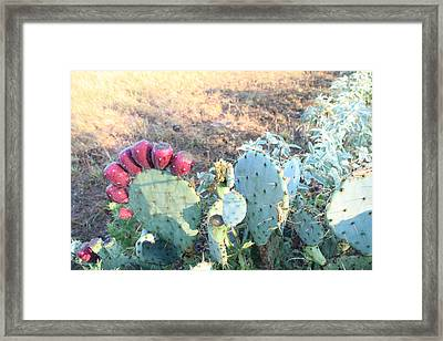 Nature Finds A Way Framed Print by Lorri Crossno