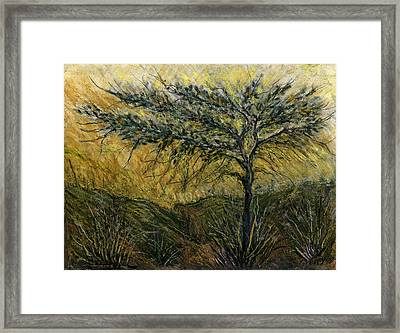Nature Landscape Green Thorns Acacia Tree Flowers Sunset In Yellow Clouds Sky  Framed Print by Rachel Hershkovitz