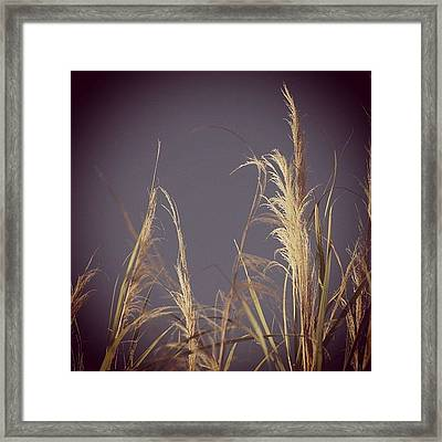 #nature #morning #beach #miami #outdoor Framed Print