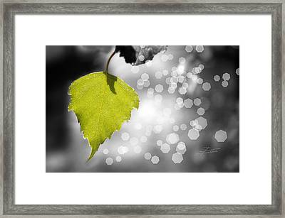 Nature Shines Framed Print by Barbara  White