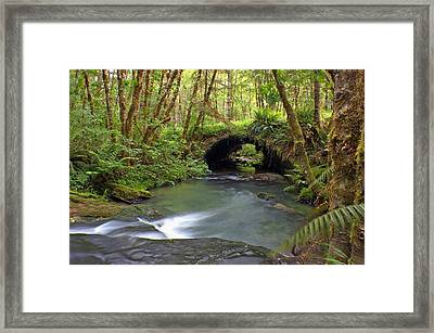 Nature Tunnel Framed Print