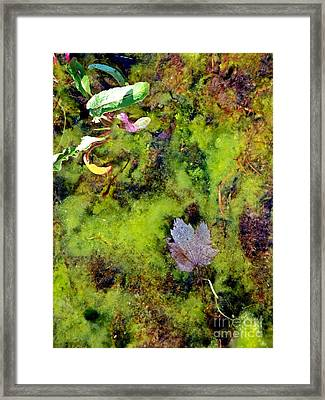 Nature's Absract Framed Print by Christian Mattison