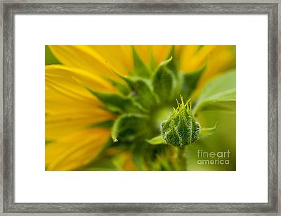 Nature's Abstract 13 Framed Print