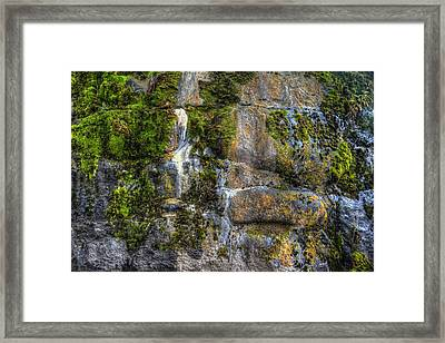Nature's Abstract Framed Print