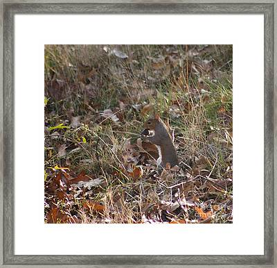 Framed Print featuring the photograph Nature's Animals by Michael Waters