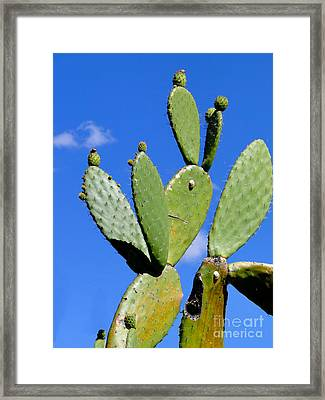 Natures Balancing Act Framed Print by Al Bourassa