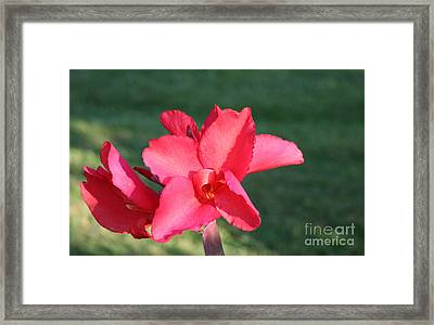 Framed Print featuring the photograph Nature's Beauty 2 by Michael Waters