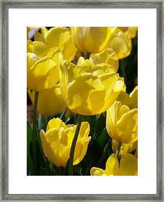 Natures Beauty Framed Print by Virginia Lei Jimenez