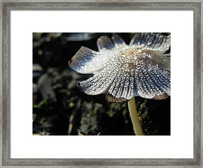 Nature's Bling Framed Print by Leah Moore