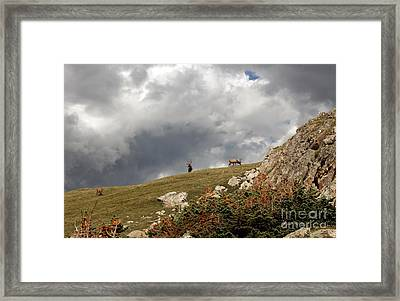 Nature's Bounty Framed Print by Juan Romagosa