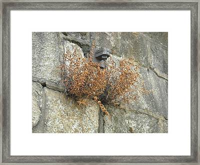 Framed Print featuring the photograph Nature's Breakout by Christophe Ennis