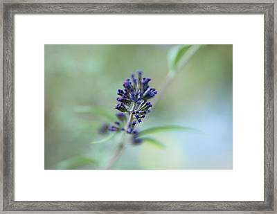 Natures Brush Framed Print by