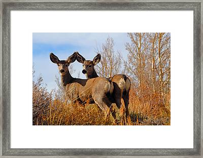 Framed Print featuring the photograph Nature's Gentle Beauties by Lynn Bauer