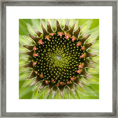 Nature's Geometry Framed Print