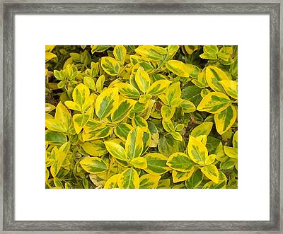 Framed Print featuring the photograph Nature's Gift by Sheila Silverstein