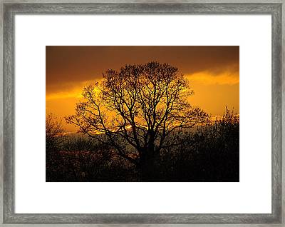 Nature's Gold Framed Print by Cat Shatwell