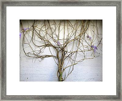 Nature's Growth Framed Print