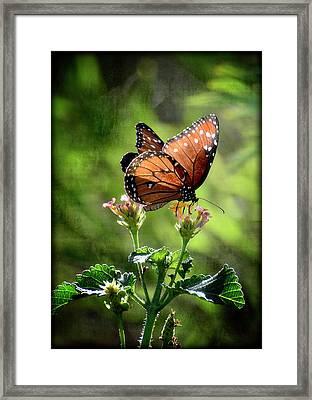 Nature's Harmony  Framed Print