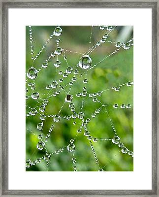 Natures Jewels Framed Print by Debra Collins