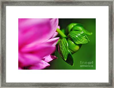 Nature's Perfection Framed Print