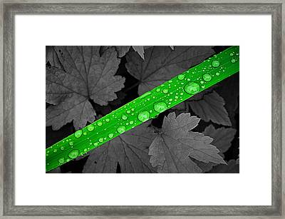 Natures Ribbon Framed Print by Paul Causie