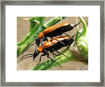 Natures Romance Framed Print by Eric Kempson