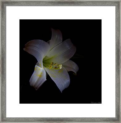 Natures Rule Framed Print by Victoria Ashley