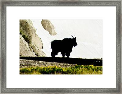 Nature's Silhouette Framed Print by Colleen Coccia