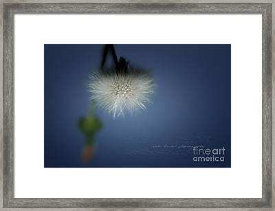 Framed Print featuring the photograph Nature's Street Lighting by Vicki Ferrari