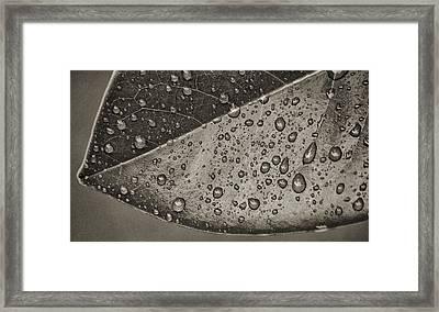 Nature's Tears Framed Print by Brenda Bryant