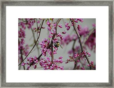 Natures View Framed Print by Aimee L Maher Photography and Art Visit ALMGallerydotcom