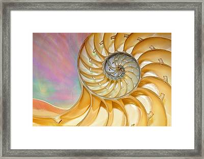 Nautilus Shell Framed Print by Dean Pennala