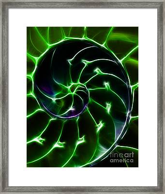 Nautilus Shell - Electric - Green Framed Print by Wingsdomain Art and Photography
