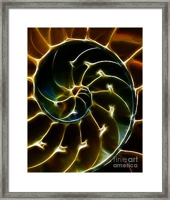 Nautilus Shell - Electric - Yellow Framed Print by Wingsdomain Art and Photography
