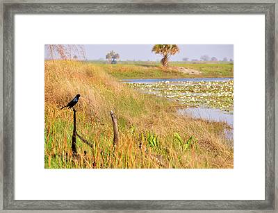 Near And Far Framed Print by Jan Amiss Photography