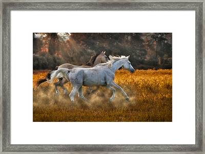 Neck And Neck Framed Print by Susan Candelario