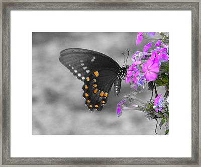 Nectar Collector Framed Print