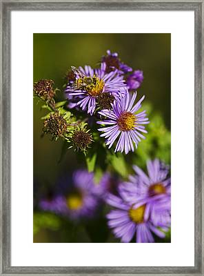 Nectar Gathering Framed Print by JT Lewis